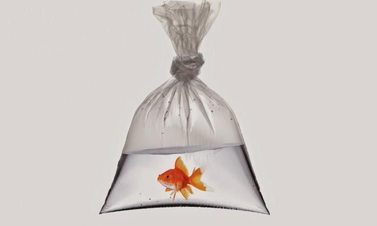 pez en bolsa