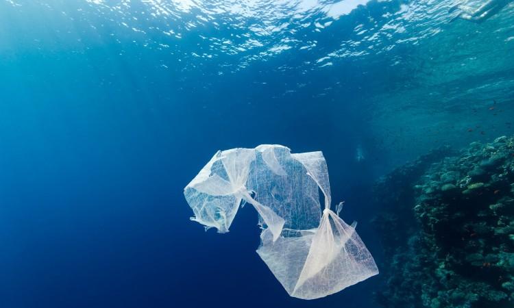 residuos plásticos en el mar,